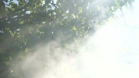 Éclat de rayons avec de la fumée par l'arbre clips vidéos