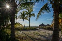Éclat de rayons de soleil par des frondes de paume sur la plage de Golfe de la Floride images libres de droits