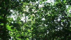 Éclat de Sun dans les branches clips vidéos