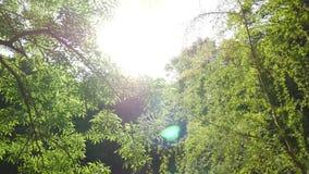 Éclat de Sun par les branches d'un arbre vert banque de vidéos