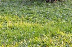 Éclat du soleil d'herbe photo stock