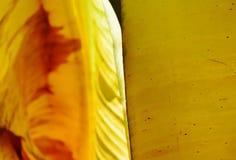 Éclat léger sur la feuille sèche de banane dans le jardin Image libre de droits