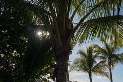 Éclat minuscule de rayons de soleil par des frondes de paume sur la plage de la Floride dans le moti photographie stock libre de droits
