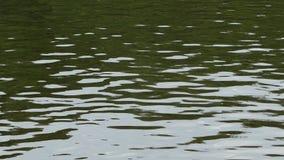 Éclat sur la surface de la rivière banque de vidéos