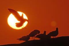 Éclipse Photos stock