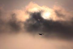 Éclipse et mouette Image libre de droits