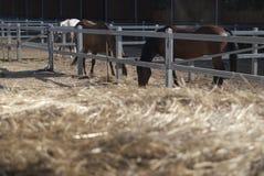 École d'équitation Photos stock