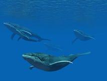 École de baleine Photographie stock libre de droits