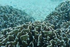 École de jeunes poissons nageant près du récif et du corail. Bel und images stock