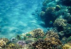École de poisson de mer en récif coralien Photo sous-marine d'habitants tropicaux de bord de la mer Photographie stock libre de droits