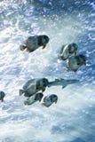 École des poissons Photos libres de droits