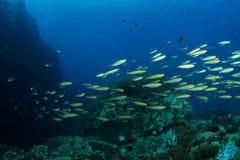 École des poissons Photos stock