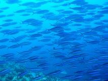 École des poissons Image libre de droits