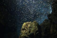 École des poissons Images stock