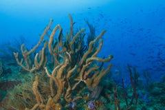 École des poissons au-dessus de Coral Reef tropicale image libre de droits
