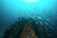 École des poissons au-dessus du récif Photographie stock