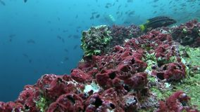 École des poissons dans Galapagos clips vidéos