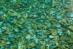 École des poissons dans l'eau claire Photo stock