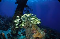 École des poissons dans le pair de sel Image stock