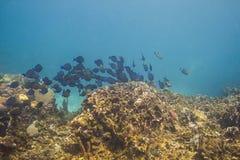 École des poissons dans un récif Photo libre de droits