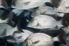 École des poissons dans une caverne Photos libres de droits