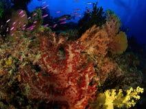 École des poissons en récif coralien Image libre de droits