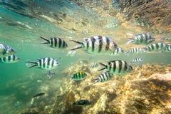 École des poissons et du récif coralien au Kenya image libre de droits