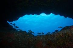 École des poissons silhouettés contre l'eau ensoleillée bleue de l'entrée sous-marine de caverne Photo libre de droits