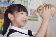 Écolière tenant le lapin d'animal familier dans la salle de classe Photographie stock