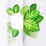Écologie abstraite de feuille de nature Photographie stock