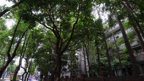 Écologie et environnement dans la grande ville urbaine L'espace vert avec les arbres et l'herbe le long de la rue banque de vidéos