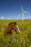 Écologie verte, turbines de vent et cheval Photo stock
