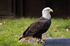 Économie de faune Photos libres de droits