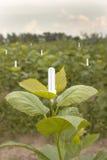 Économies d'énergie d'éclairage de jardin. image libre de droits