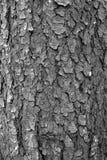 Écorce à feuilles caduques texturisée en noir et blanc Photos stock