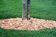 Écorce autour d'arbre Photographie stock