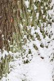 Écorce avec la neige Photos stock