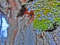 Écorce congelée colorée Photographie stock libre de droits