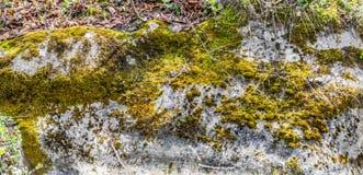 écorce couverte de mousse d'un arbre tombé images stock
