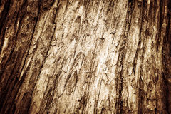 Écorce d'écorce d'écorce d'arbre de photo Image libre de droits