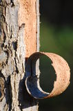 Écorce d'arbre Images libres de droits