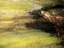 Écorce d'arbre 14 Images libres de droits