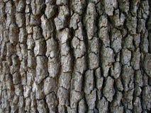 Écorce d'arbre Image libre de droits