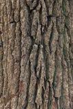 Écorce d'arbre Photographie stock