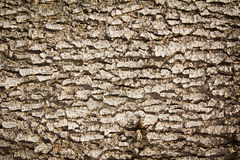 Écorce d'arbre illustration libre de droits