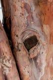 Écorce d'arbre Photos libres de droits