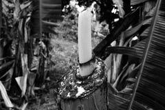 Écorce d'arbre photo libre de droits