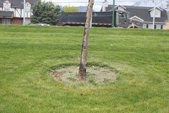 Écorce d'arbre avec clôturé semi photos stock
