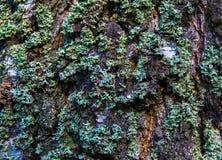 Écorce d'arbre avec de la mousse images libres de droits