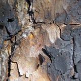 Écorce d'arbre carbonisée Image libre de droits